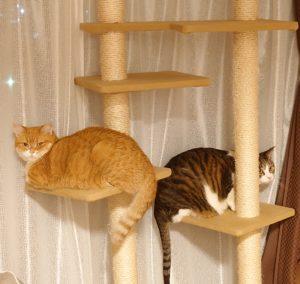 教室にいる猫さんたちの写真特集③