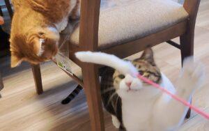 猫さんと人間に嬉しいプレゼント🎁💕