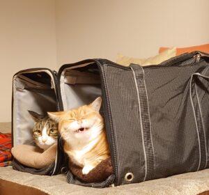 教室にいる猫さんたちの写真特集④