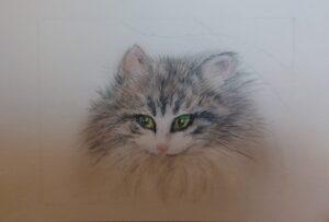 ノルウェージャンフォレストキャットの美猫✨ソイちゃん✨