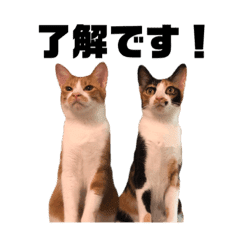 Daily life of funny Nyans – LINE stickers   LINE STORE