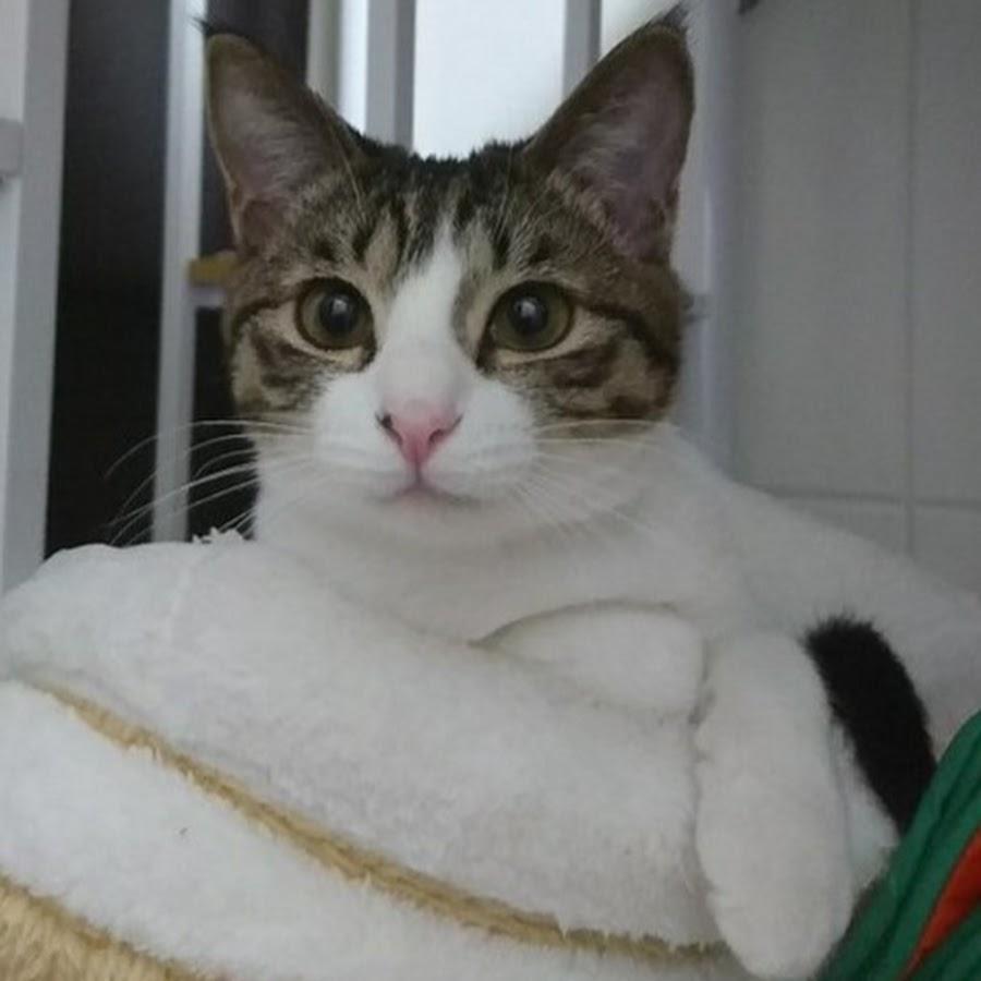 色鉛筆で猫の絵を描こう! 猫のいる 猫の絵教室 ATELIER cats